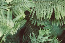 Free Picture Leaf Nature Fern Free Picture Green Leaf Flora Nature Fern Plant Forest Herb