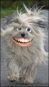 happy happy woof woof