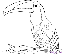 how to draw a toucan step by step birds animals free online