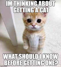 Thinking Cat Meme - can anyone help me imgflip