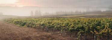 the vineyard and valley tour route travel oregon