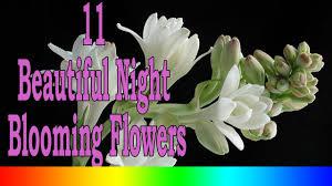 11 beautiful night blooming flowers youtube