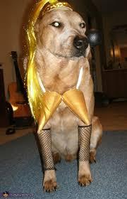 Funny Dog Costumes Halloween 56 Dog Halloween Costumes Images Animals