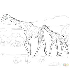 sympho page 243 kid pictures to color giraffe to color winter