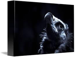 Seeking Vulture Vulture Seeking Spiritual Guidance By Alan Shapiro