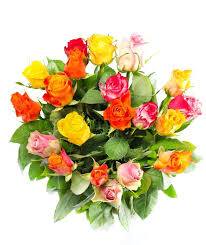 multicolor roses multicolor roses bouquet isolated on white stock photo colourbox