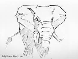 elephant sketch by leighton hubbell dribbble