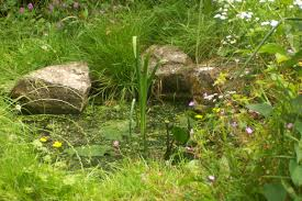 tiny city pond help water features homes for wildlife the