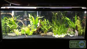 10 gallon planted tank led lighting finnex led light combinations and review youtube