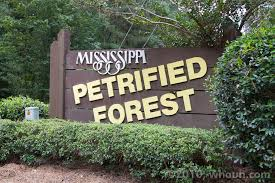 Mississippi forest images Mississippi petrified forest ms hauns go west jpg