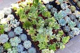 Rock Garden Succulents Solar Gardens In The Stewingpot