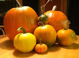 halloween images free download free images nature farm stem fall orange food harvest