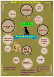 how to treat dog allergies efficiently
