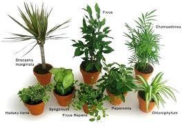 plante verte chambre à coucher plante verte interieur depolluante 5 plantes dintacrieur pour