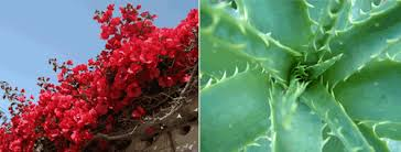 What To Use For Climbing Plants - aca efficient water use for gardening and domestic watering