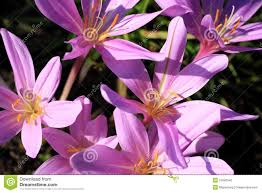 Poisonous Garden Flowers by Poisonous Plants And Flowers Stock Photo Image 51892540