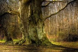 tree symbolism tree symbolism sun signs