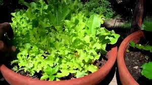 indoor vegetable garden tips pot your indoor vegetable garden