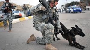 belgian shepherd navy seals dogs of combat 28 photos