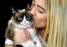 Frown Cat Meme - grumpy cat owner awarded over 700 000 in lawsuit cat still won t
