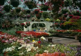 skyline gardens and ponds greenhouse