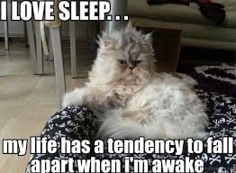 Sleepy Cat Meme - 70 most awesome sleep memes all time best sleep memes pictures