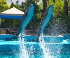 las vegas welcomes baby dolphin u2013 las vegas review journal