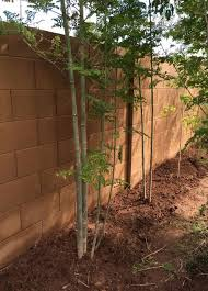 Transplant Fruit Trees - best 25 tree transplanting ideas on pinterest trees to plant