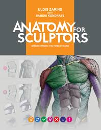Anatomy Channel Anatomy For Sculptors