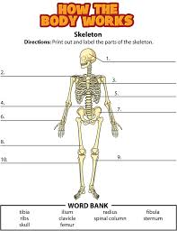 best 25 skeleton labeled ideas on pinterest human skeleton