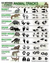 paw print sheets animal tracks id sheets hiking michigan