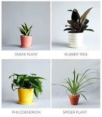 good inside plants good indoor plants for bedroom glif org