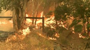 Graham Wa Wildfire by Cocos Fire In San Marcos San Diego Destroyed Two Homes On Mt