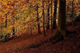 leaves season fall color autumn tree seasons landscape nature leaf