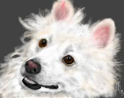 pictures of a american eskimo dog american eskimo art etsy