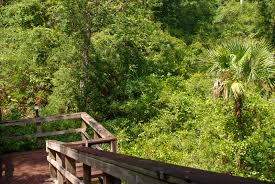 Sinkhole Florida Map by Ocala National Forest Lake Eaton Sinkhole Trailhead