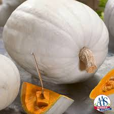 white pumpkins pumpkin moon f1 all america selections