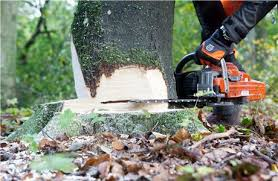 6 steps to successful tree felling