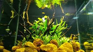 Aquascape Malaysia Aquascape Addicts Telangana India Phone 91 40 6648 5868