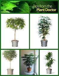 10 houseplants that can survive in even the darkest corner indoor