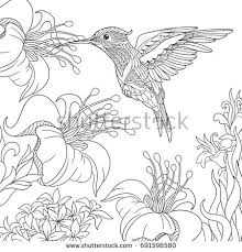 coloring pictures of hibiscus flowers coloring page hummingbird hibiscus flowers freehand stock vector