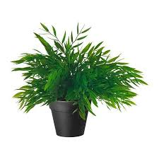 Indoor Decorative Trees For The Home Shop Amazon Com Artificial Trees U0026 Shrubs