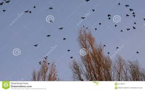 birds flying away from the tree footage 67788611 megapixl