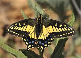 plin media how to attract butterflies to your garden