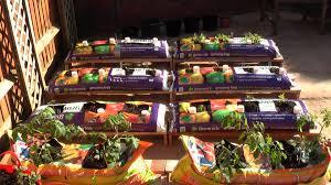 Patio Grow House Patio Vegetable Garden Plants Home Outdoor Decoration