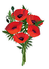 poppies flowers flower poppy bouquet stock image image of collection 33026859