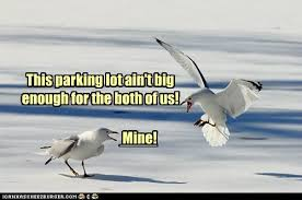 Finding Nemo Seagulls Meme - i can has cheezburger seagulls page 4 funny internet cats