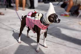 Sharknado Halloween Costume Huntington Beach Dog Halloween Costume Contest Features Sharknado