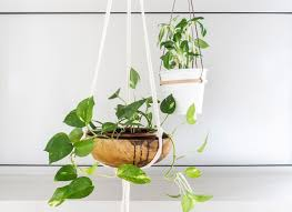 Home Interior Plants by Indoor Plants Archives Sitsitso