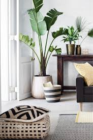 floor plant living room plants home design and decor